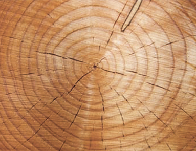 Industrie: Holz